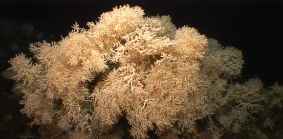 Algunos de los arrecifes de coral más antiguos del Mediterráneo empezaron a formarse hace 400.000 años