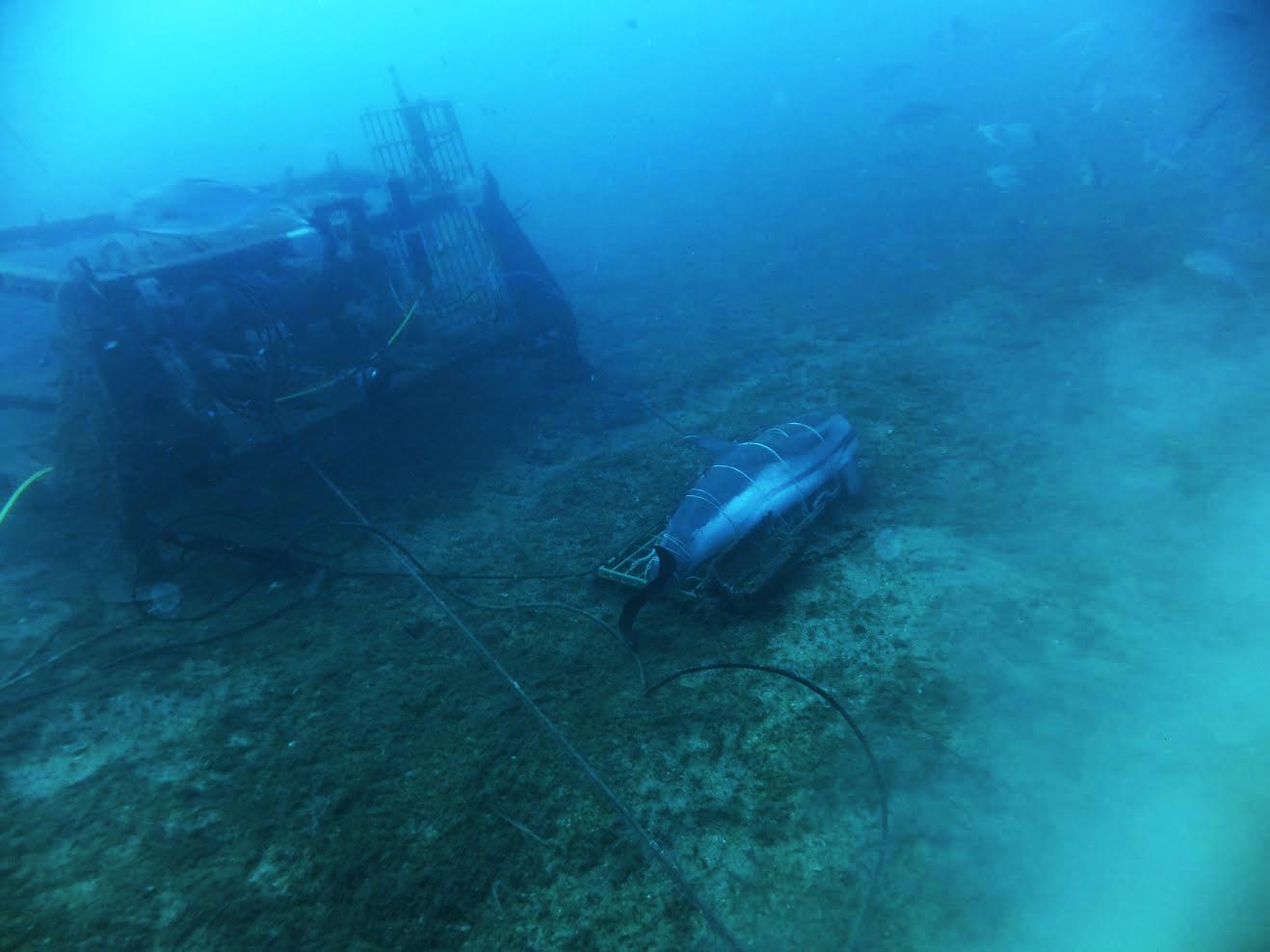 Hunden un delfín muerto para ver las consecuencias sobre el ecosistema marino