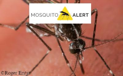 Imagen Mosquito Alert