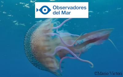 Logo Observadores del mar