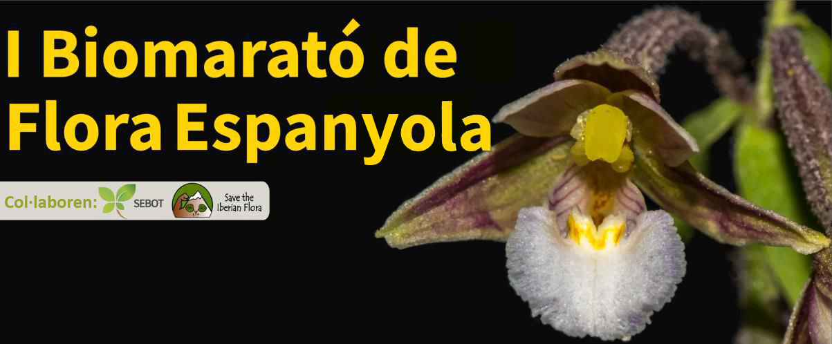 I Biomaratóde Flora Espanyola