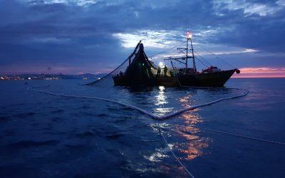 La pesca puede alterar el comportamiento colectivo de los peces, con consecuencias ecológicas y socio-económicas