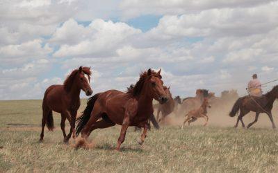 Los caballos modernos fueron domesticados en las estepas al norte del Cáucaso y se extendieron por Asia y Europa